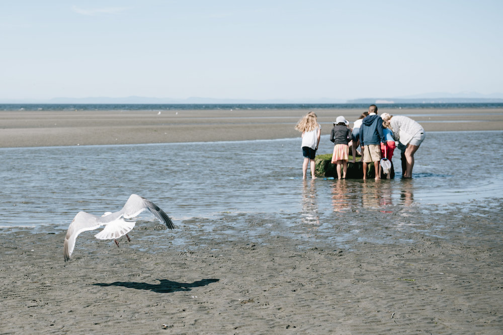 Beachcombing White Rock | Natalia Reardon